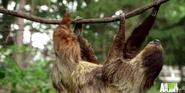Bronyx Zoo TV Series Sloth