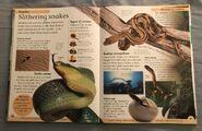DK First Animal Encyclopedia (43)