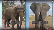 HappyLearning Elephants