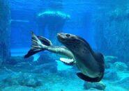 Leopard Seal (V2)