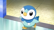Piplup Anime