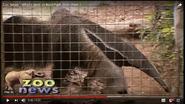 Reid Park Zoo Anteater