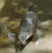 Seneca Park Zoo Otter