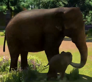 Sri-lankan-elephant-zootycoon3