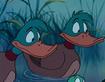 TLM Ducks