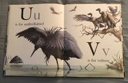 The A to Z Book of Wild Animals (19)