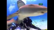 UTAUC Nurse Shark
