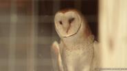 Utica Zoo Barn Owl