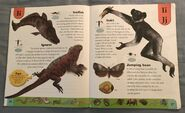 Weird Animals Dictionary (10)