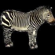 ZT2 Cape Mountain Zebra