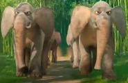 BT Asian Elephant
