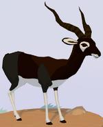 Blackbuck WOZ