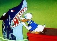 Bull shark at no sail