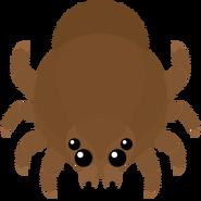 Mopeio Goliath Spider