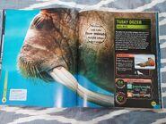 Super Shark Encyclopedia (63)