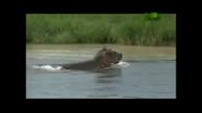 UTAUC Hippo 2
