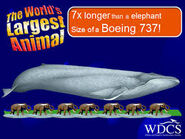 Blue Whale and 7 Asian Elephants