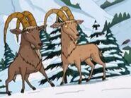 Challenging Ibexes