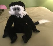 Connor the Colobus Monkey