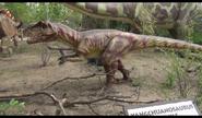 Dinosaurs Alive! Yanguanosaurus