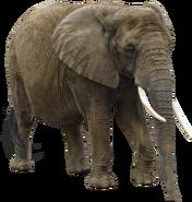 Eac10438 elephant