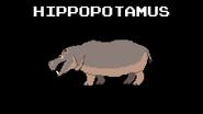 KPS Hippopotamus