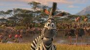 Madagascar2-disneyscreencaps.com-2822