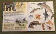 My First Book of Animals from A to Z (8)