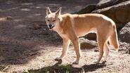 Dingo (V2)