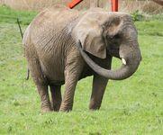 Elephant Ark