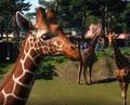 GiraffeScreencap