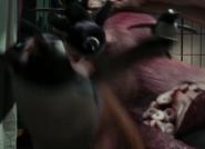 NatM Penguins