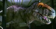 Real Tyrannosaurus 2