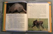 Scholastic Encyclopedia Of Animals (2)