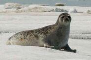 Sealsurvey 02