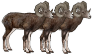 The bighorn brothers