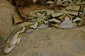 CITIRWN Python