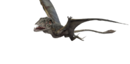 Dimorphodon-detail-header