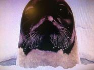 Hap palmer seal
