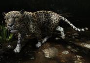 Jaguar SOTTR (1)