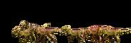 Microceratus-detail-header
