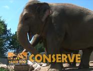 Niabi Zoo Elephant