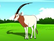 Rileys Adventures Scimitar-Horned Oryx