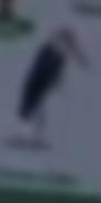 SML Stork