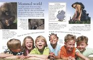 Baboons Echidnas Hedgehogs Hippopotamuses Elephants Humans Mice Whales Platypuses Beavers and Otters