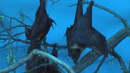 Cincinnati Zoo Fruit Bats