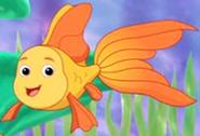 DTE Goldfish
