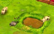 Domestic-pig-zoo-2-animal-park
