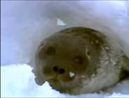 MMHM Seal