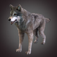 Model Northwestern Wolf